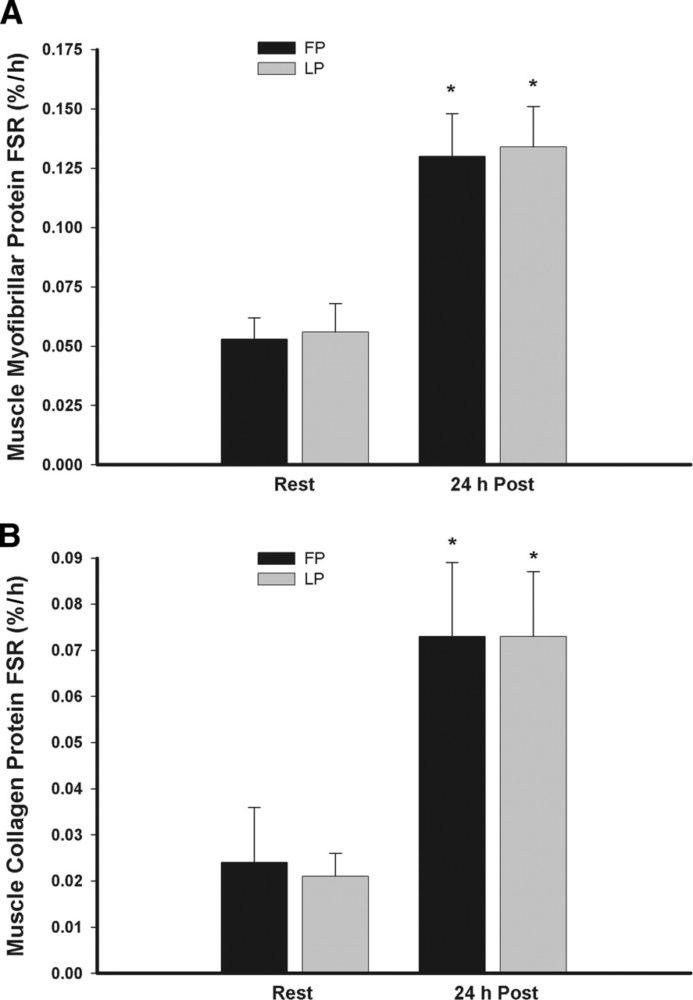 Beeinflusst der natürliche Zyklus die Muskelproteinsynthese?
