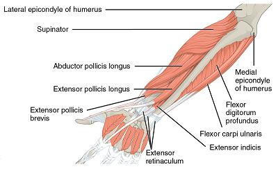 Muskelspezifische Hypertrophie: Rücken, Arme, Beine & Bauch