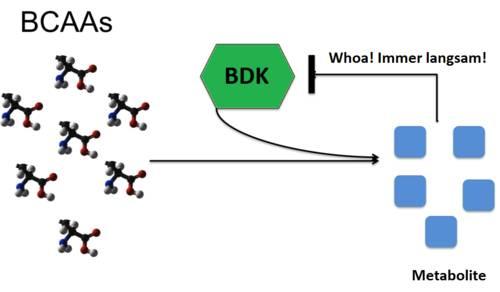 BCAAs: Nur ein Hype oder effektives Supplement?