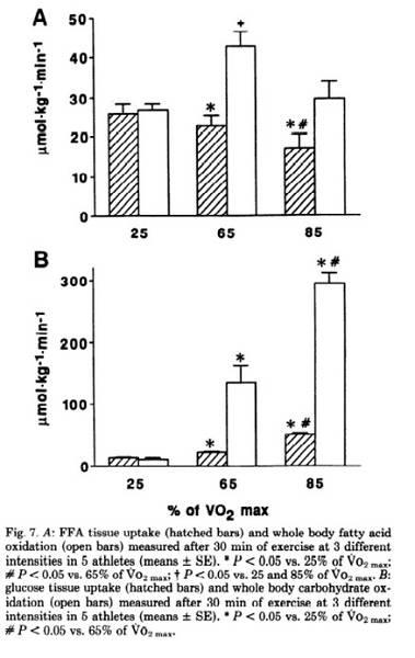 Energiesysteme des Körpers: Fettoxidation