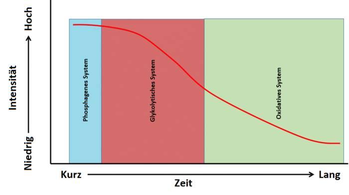 Substratnutzung im Training nach Zeit und Intensität