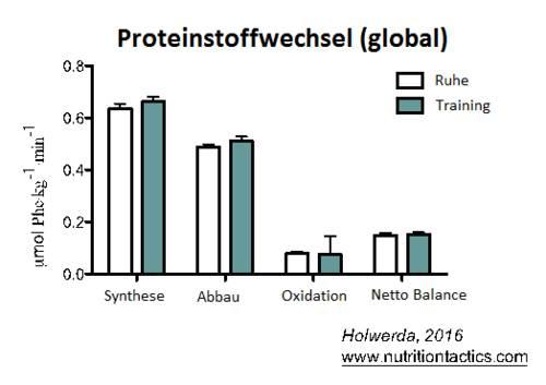 Muskulös und definiert bleiben - Das Studienergebnis - globaler Proteinstoffwechsel