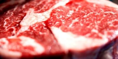 Proteinreiche Ernährung | Schlecht für Nieren & Knochen?