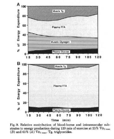 Intrazelluläre Substratnutzung & Blut