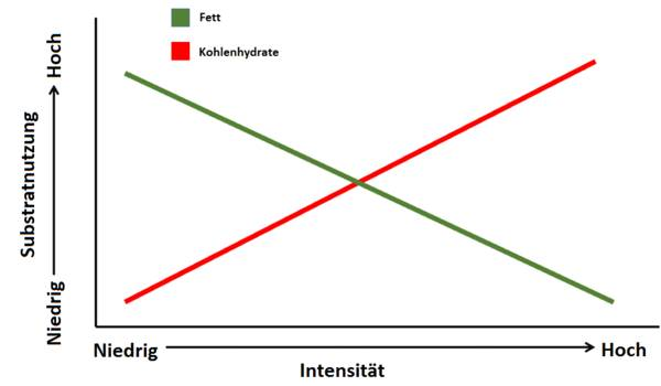 Fett- und Kohlenhydratverbrennung im Training nach Zeit und Intensität