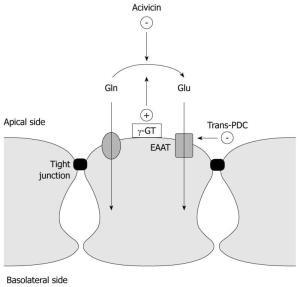 Whey Protein und Immunsystem