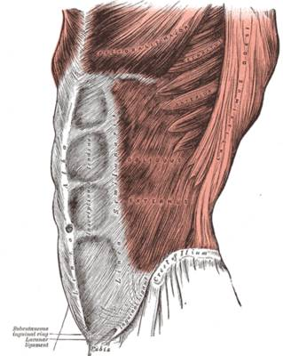 Training & Funktion der Bauchmuskulatur