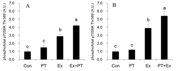 Protein-anaboler Effekt von Panaxatriol (Ginseng) nach Widerstandstraining | Studien Review