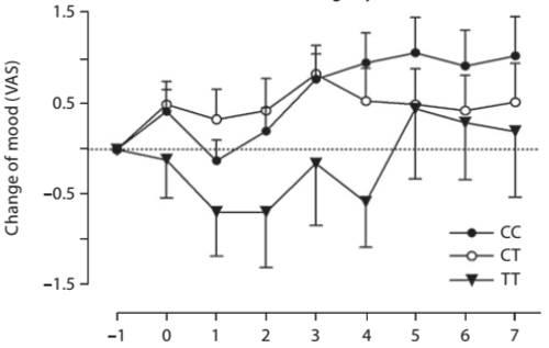 Genotyp-spezifische Effekte von modifiziertem Fasten (Gesamtkalorienzufuhr bei <350 kcal/Tag) auf die Stimmung von 108 Teilnehmern (Michaelsen et al., 2010). Anmerkung: Obwohl die TT Gruppe keine signifikanten Verbesserung in Stimmung erfahren haben, haben sich die Stimmungslevel in Wahrheit verbessert – es hat nur ein wenig länger gedauert, als für die Teilnehmer der CC und CT Allele.