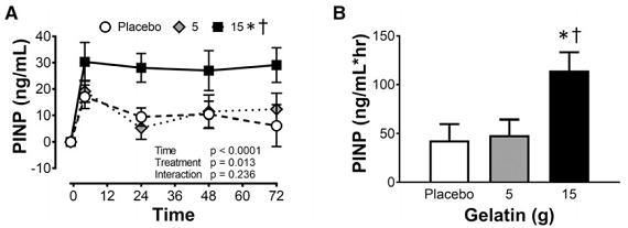 Kollagensynthese nach Training und der Einnahme eines Placebos oder 5g Gelatine oder 15g Gelatine. (A) PINP Konzentration im Blut der Teilnehmer 4, 28, 48 und 72 Stunden nach der ersten Trainingseinheit zusammen mit (B) der AUC für die PINP Konzentrationen für das Placebo oder 5g Gelatine oder 15g Gelatine. (Bildquelle: [1])