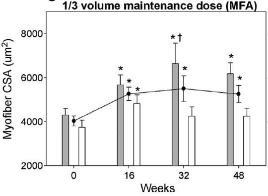 In der 1/3-Gruppe erhöhte sich die Muskelquerschnittsfläche des Vastus Lateralis während der ersten 16 Wochen der Erhaltungsphase.