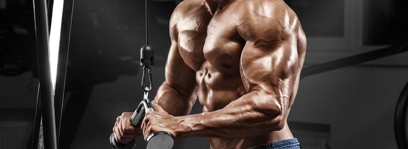 Lässt sich Muskelwachstum vorhersagen?