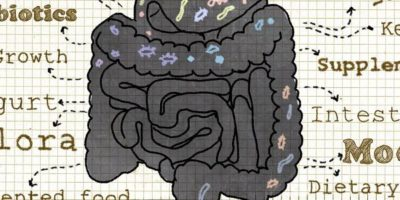 Probiotika im Kampf gegen bakteriellen Überwuchs im Dünndarm (SIBO) | Studien Review