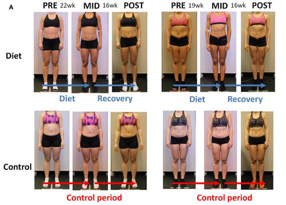 Frauen & Wettkampfdiät: Runter auf 10% Körperfettanteil – Mängel, Muskeln, Hormone & Jojo-Effekt | Studien Review