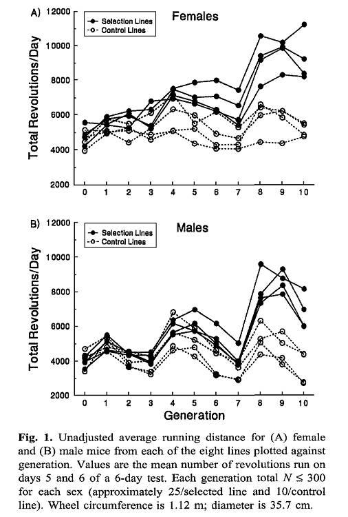 Der Hang zur Aktivität: Genetische beeinflusst?