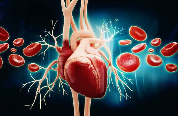 Ist Cholesterin nicht schlecht für das Herz?