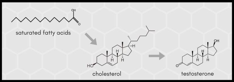 Wie kann Cholesterin den Muskelaufbau fördern?