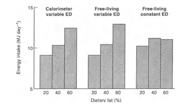 High Fat Diäten | Isst du weniger Nahrung, wenn du mehr Fett isst?