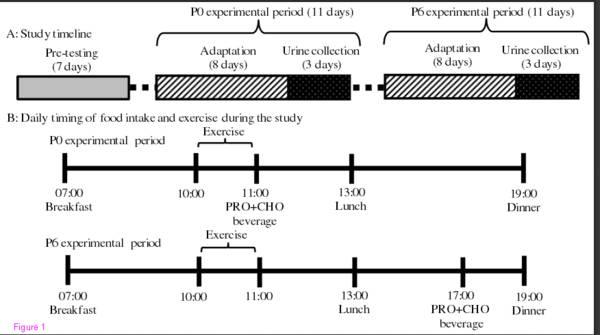 Das anabole Fenster: Optimalere Stickstoffbilanz durch unmittelbaren Proteinverzehr nach dem Training in Trainierten | Studien Review
