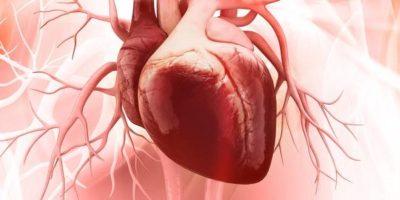 Stickoxid (NO): Wirkung, Funktion & Rolle beim Muskelaufbau – Teil 2