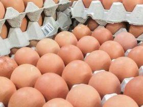Gute Proteinquellen erkennen? - Teil 1: Die Proteinverdaulichkeit