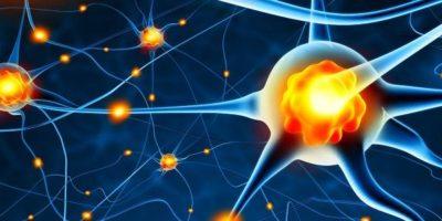 Das Zentralnervensystem (ZNS) und seine Rolle beim Kraftsport