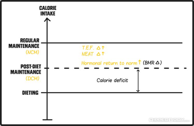 Welche Faktoren beeinflussen den Erhaltungskalorienbedarf während und nach einer Diät? (Bildquelle: RippedBody.com)