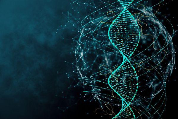 Aufgrund einer unterschiedlichen genetischen Ausstattung reagieren zwei Menschen, die ein- und demselben Trainingsprogramm folgen, unterschiedlich gut darauf. Die eine Person kann rasante Fortschritte erfahren, während sich bei der anderen kaum was tut. Das sind Fakten.