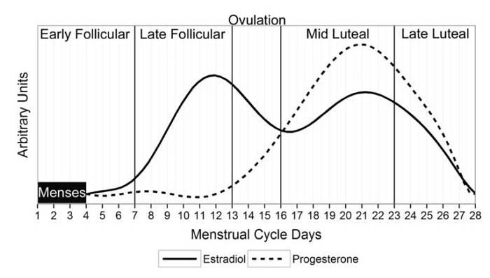 Periodisierung des Menstruationszyklus für besseren Muskel- & Kraftaufbau