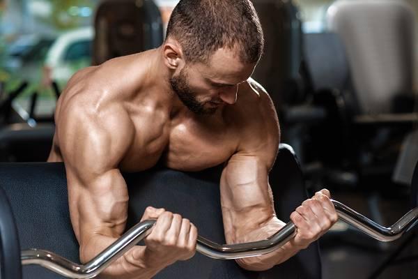 Bizepstraining für optimalen Muskelaufbau | Übungen, Frequenz & Periodisierung