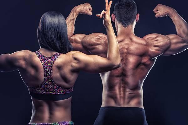 Bizeps Training für optimalen Muskelaufbau | Übungen, Frequenz & Periodisierung