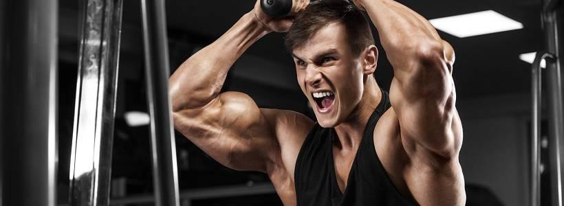 Trizeps Training für optimalen Muskelaufbau | Übungen, Frequenz & Periodisierung