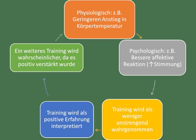 Reaktion auf körperliches Training bei Personen mit vorteilhafter Physiologie.