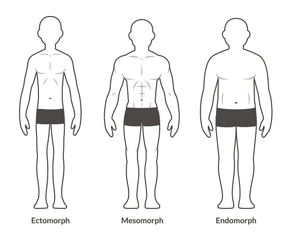 Die klassische Einteilung der Körpertypen nach Sheldon: Ektomorph, Mesomorph & Endomorph.