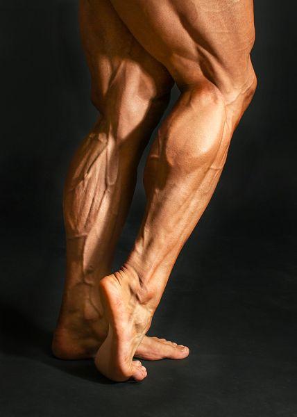 Stramme Waden sind unter Kraftsportlern und Bodybuildern überaus beliebt. Das Training der Wadenmuskulatur gehört für eine passende Gesamtoptik einfach dazu.